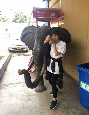 象のレプリカと夏菜さん