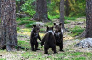 立って輪になっている子熊たち