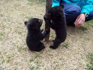 小さい熊の赤ちゃん