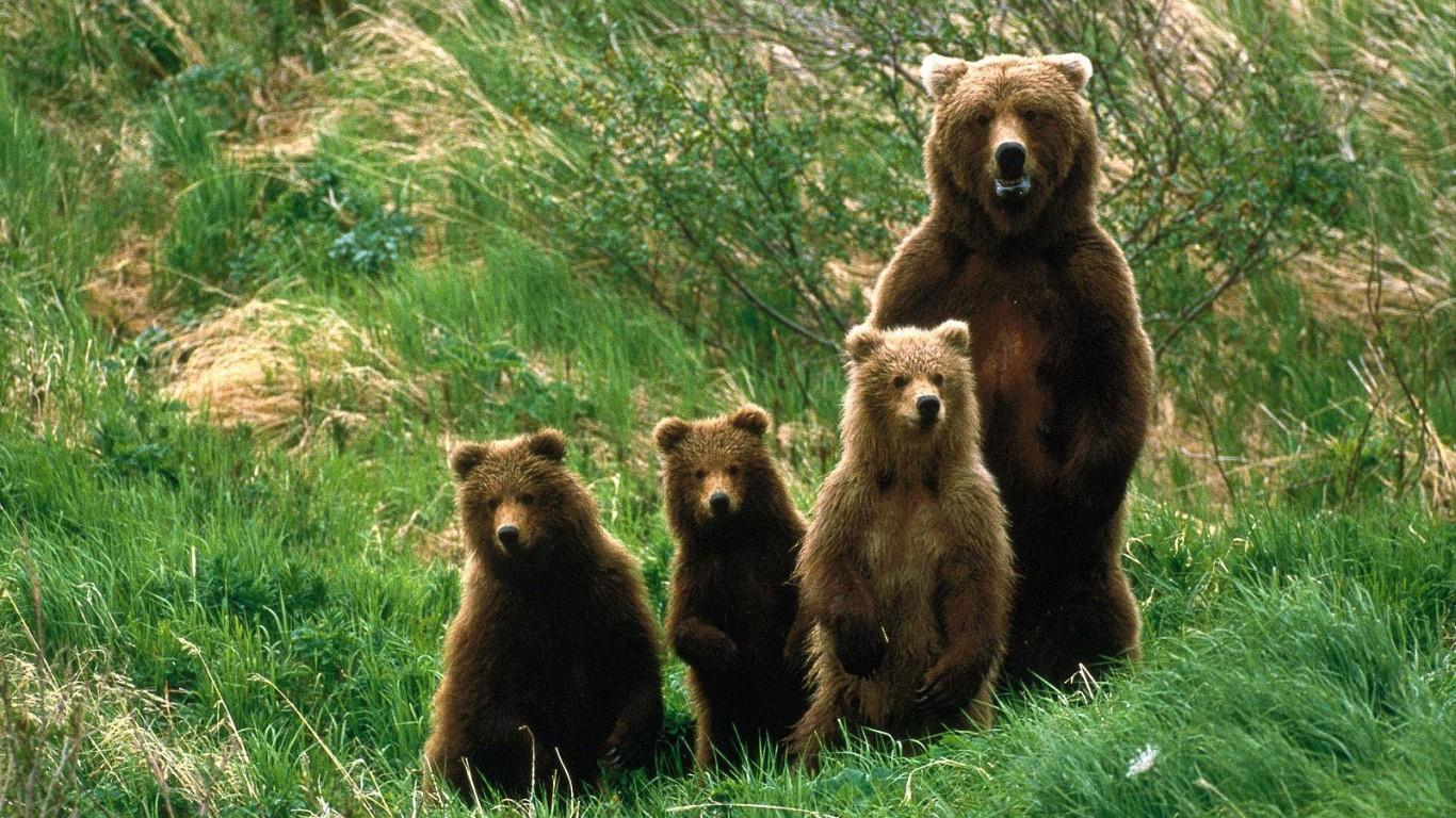 人々に愛される!かわいい熊の子供の高画質な画像まとめ