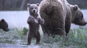 こちらをみている子熊