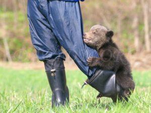 しがみつく子熊