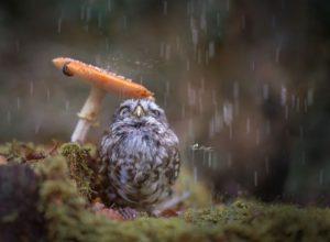 雨宿りするフクロウ