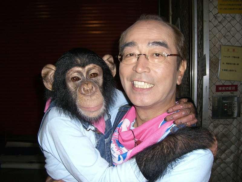 「天才志村動物園」で共演中の志村けんさんとチンパンジーのパンくん。小さい子にとっては志村けんさんは園長のイメージが強いかもしれませんね。