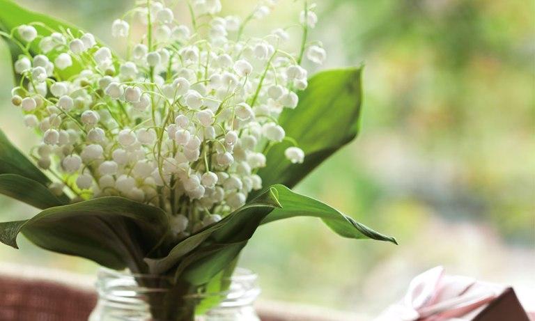 すずらんの学名のConvallariaは、ラテン語の「谷」を意味するconvalisと、「5月の開花」を表すmajalisに由来しています。