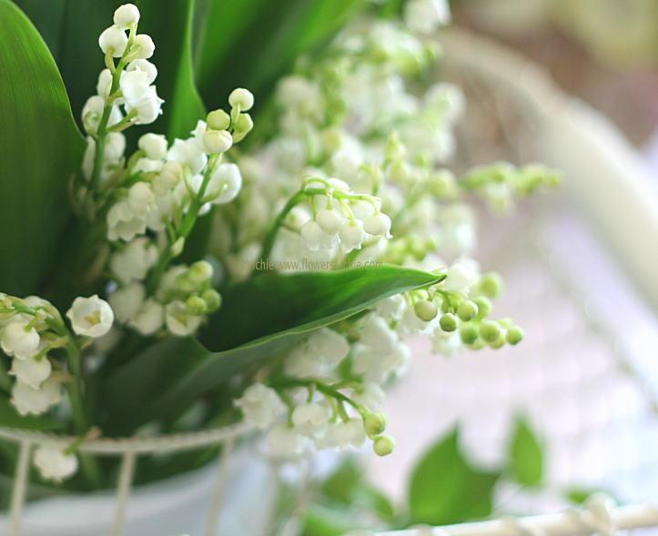すずらんはヨーロッパにも多く自生していて、様々な名称があります。May lily, Lady's tears, ladder-to-heavenなどです。