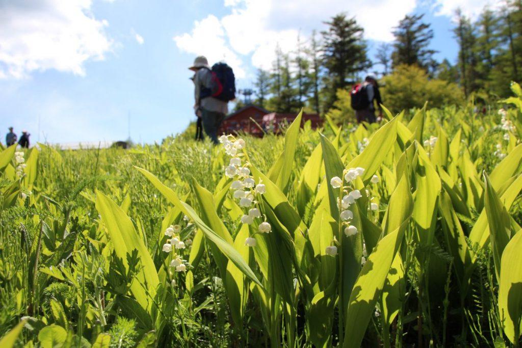 すずらんは他の花の香りとも相性が抜群で、とりわけバラやスイートピー、フリージアと良く合います。