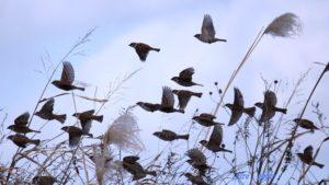 飛んでいる雀