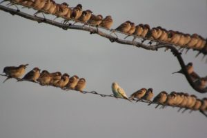 密着する雀