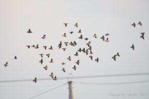 空を飛ぶ雀たち
