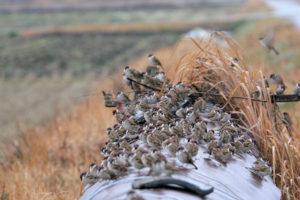 密集する雀