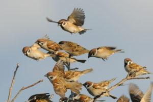 木にとまる雀と飛ぶ雀