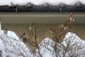 雪景色と雀