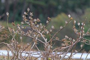 枝で休む雀