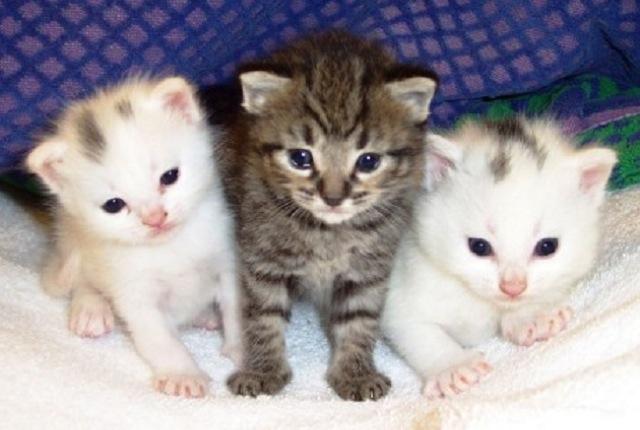 癒される可愛い猫の画像まとめ!壁紙に最適な高画質画像をピックアップ!